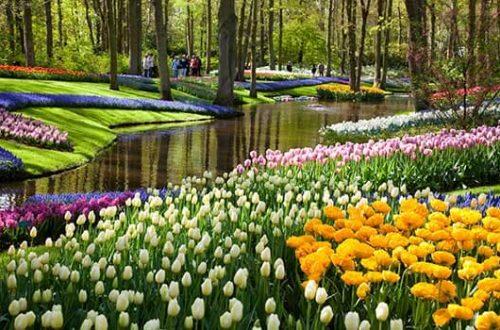 du lịch hà lan amsterdam vườn hoa kenkenhof
