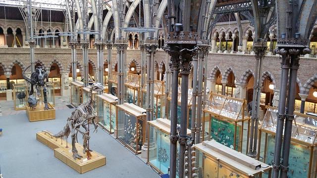 Bảo tàng Lịch sử tự nhiên Oxford